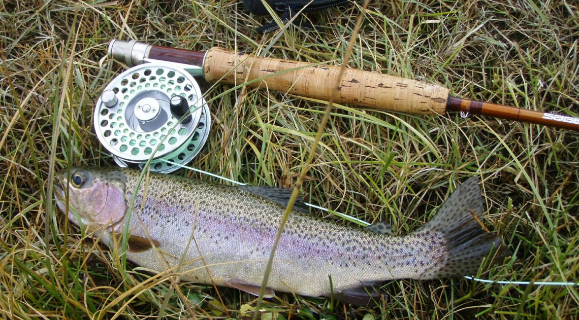 Fly fishing Rod and Rainbow Trout