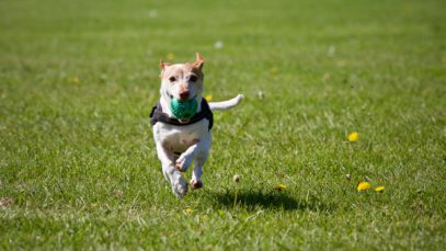 Photo of dog running with a ball