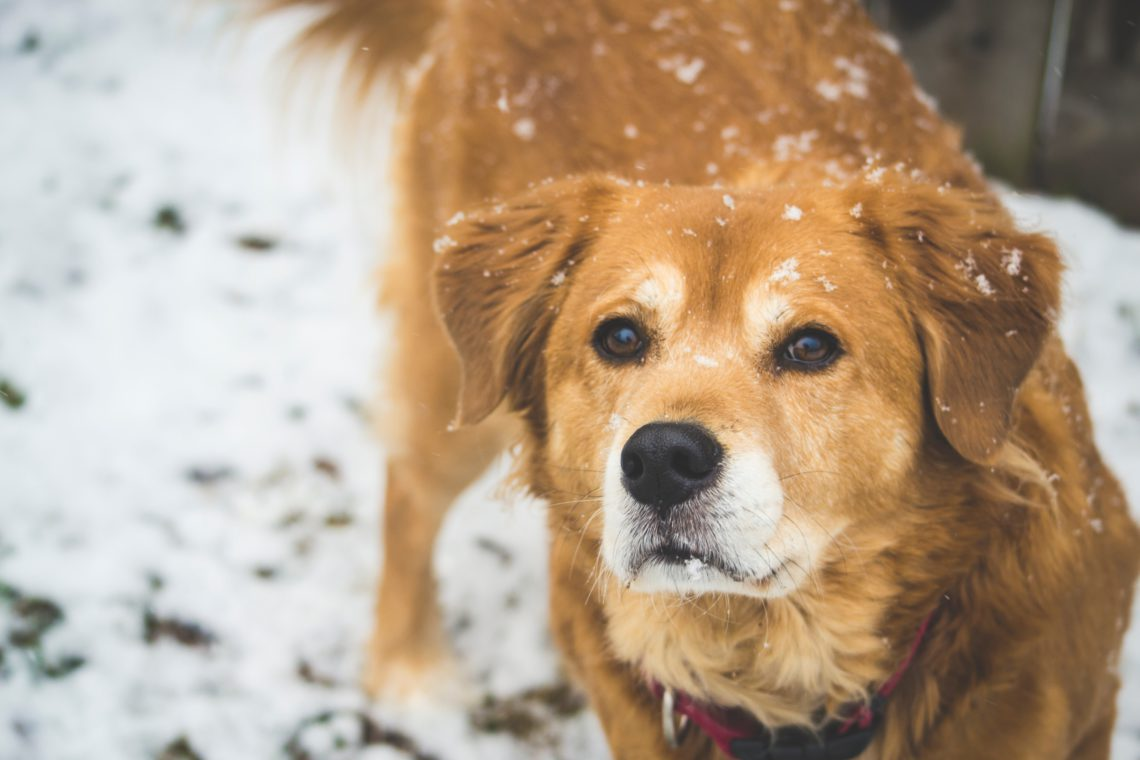 photo of dog in snow