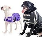 derby-waterproof-insulated-dog-coat