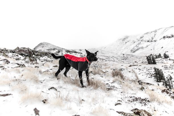 dog wearing a winter dog coat in the snow
