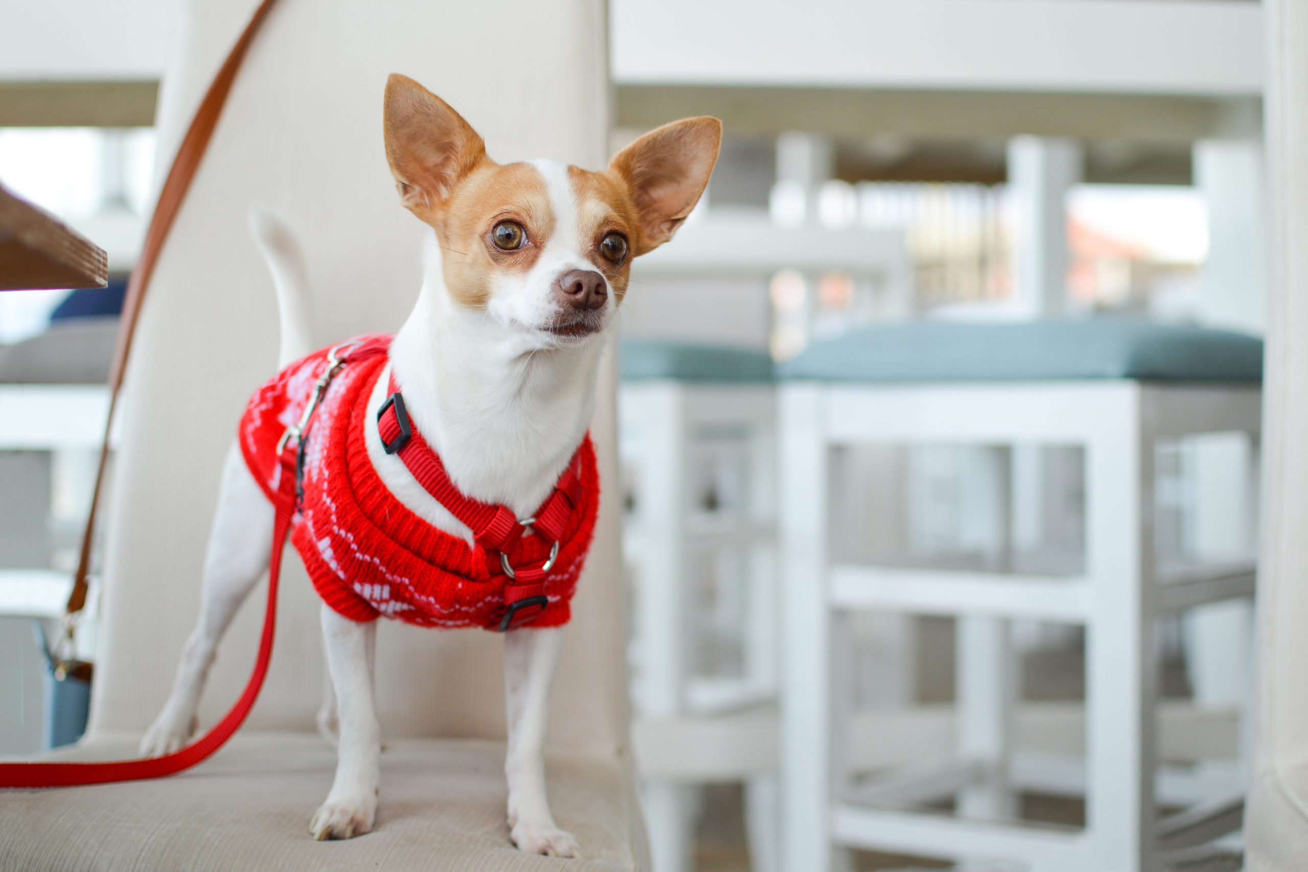 photo of dog wearing a winter dog coat