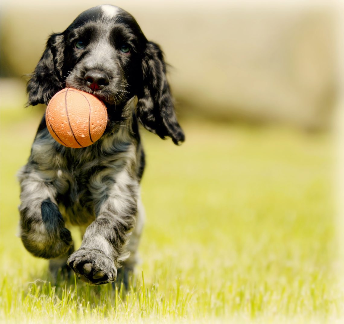 photo of a dog playing with a rubber ball