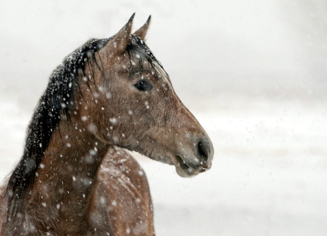 photo of a horse in the snow