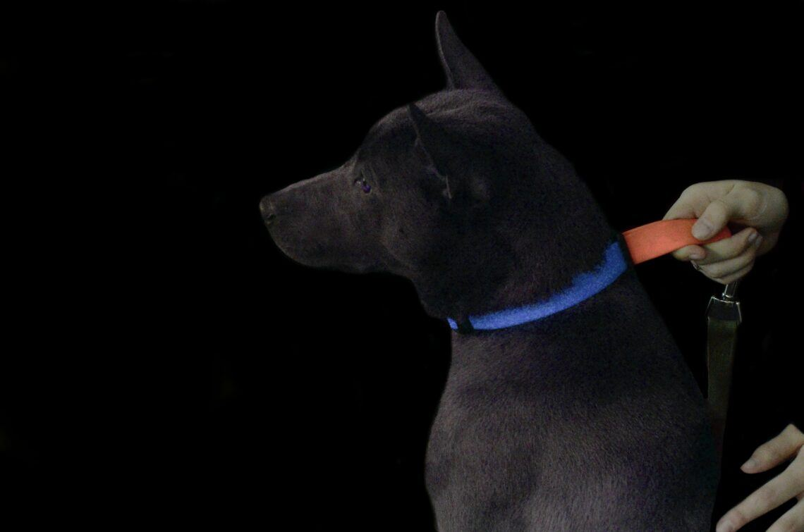 Glow Dark LED lighted dog collar