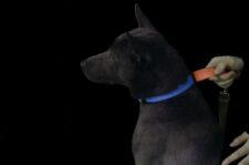 Glow Dark LED lighted dog collar