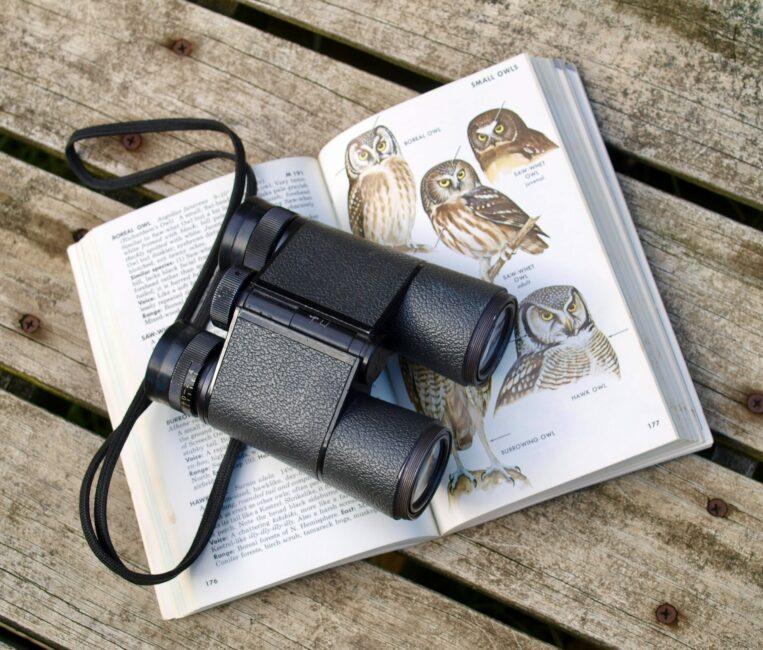 Birding binoculars and fieldguide